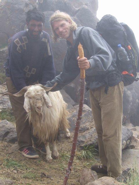 friendly Afghan shepherd