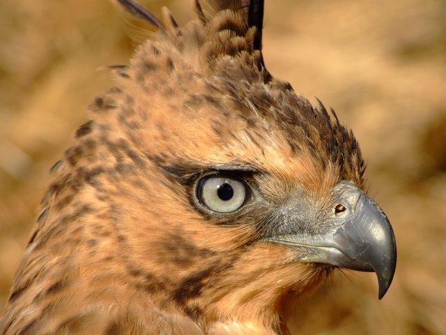 eagle (I think)