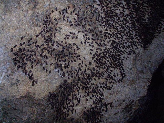 Bat-cave