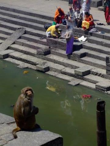 Monkey at the burning Ghats