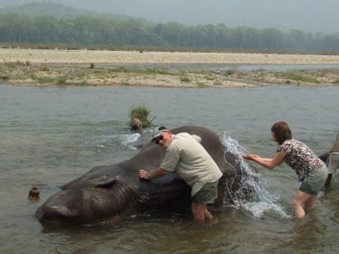 mum & dad, washing a elephant