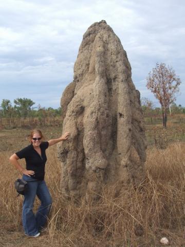 termite mount