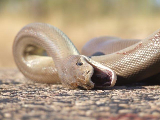 ex-snake
