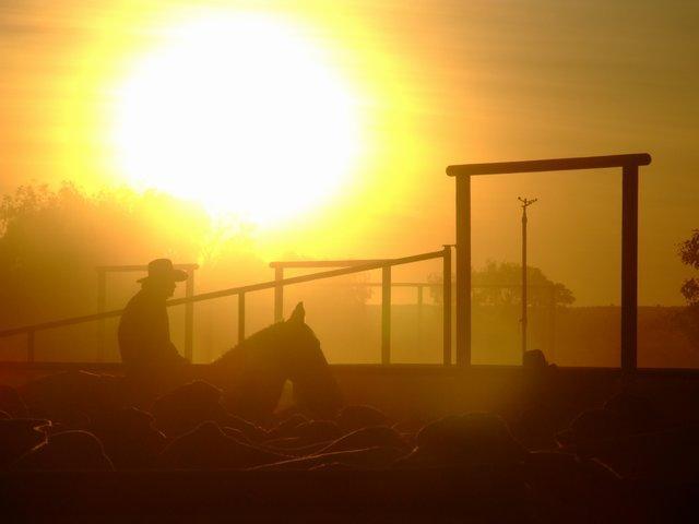'morning cowboy