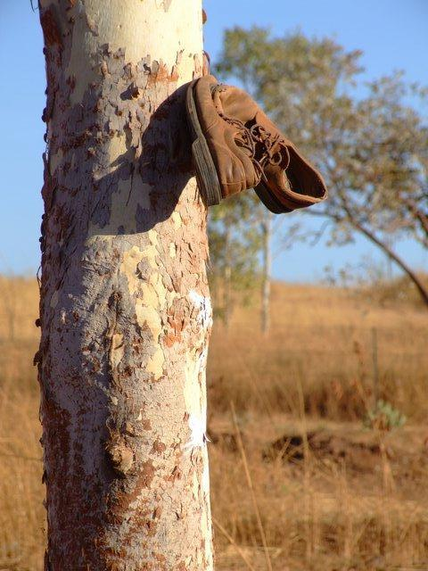 shoes on a tree...