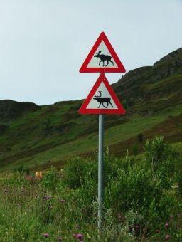 beware, Reindeer AND Elk...