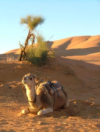 in the Sahara