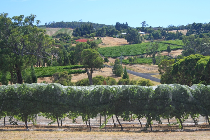 wineries and hills