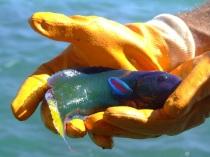 pretty little fish