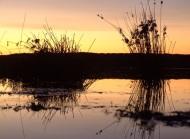 waterhole along the Nullarbor