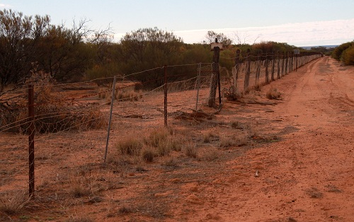 The rabbit proof fence cycling dutch girl