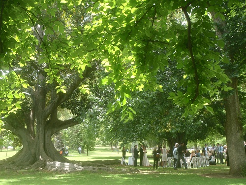 a wedding in the park, Adelaide
