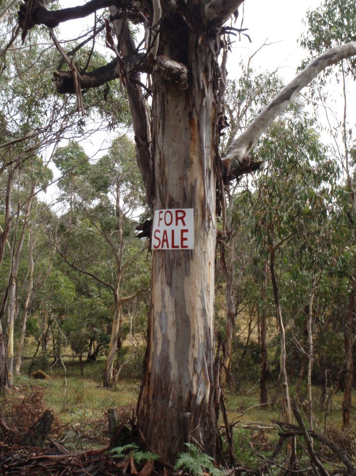 Tree for sale...?