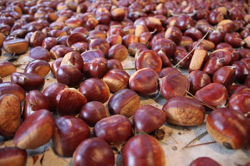 A lot of Chessnuts