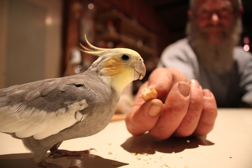 the man and the bird