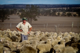 The Sheep Farmer