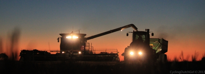 Harvest at Wyalong Farm, Tenindewa