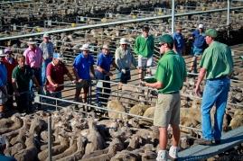 Katanning Sheepyards