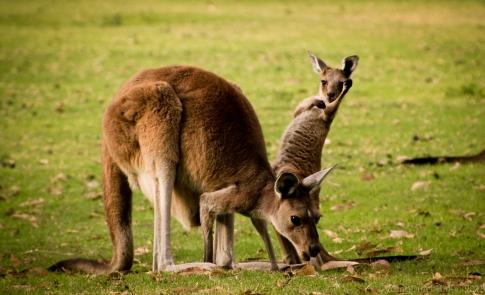 Mum & Child