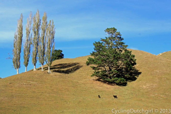 Hills Trees Cows