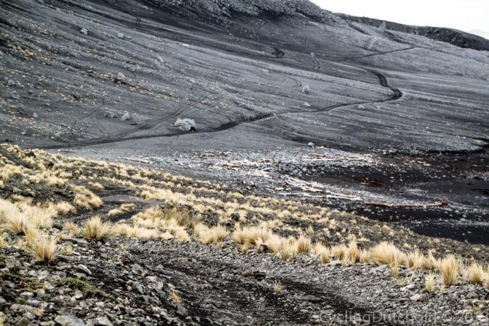 Cape Palliser Track