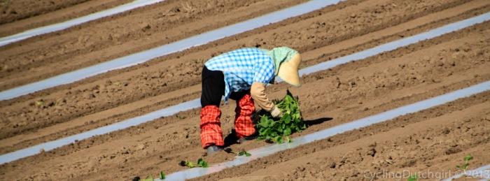 Farming Lady