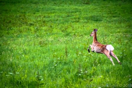 Ah Deer