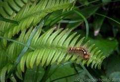Cute bug, but poisonous