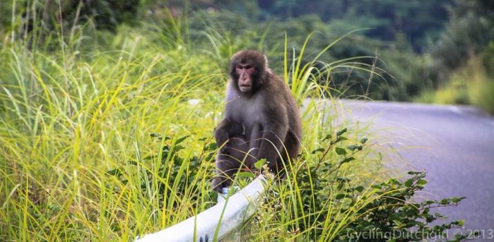 Monkey on my road