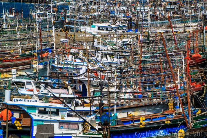 Many squid boats