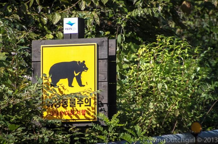Bear here