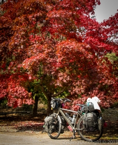 Red tree Bike