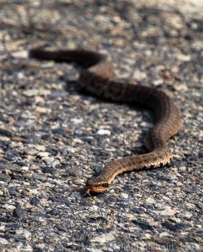 Hi snake