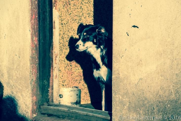 SNorri's dog