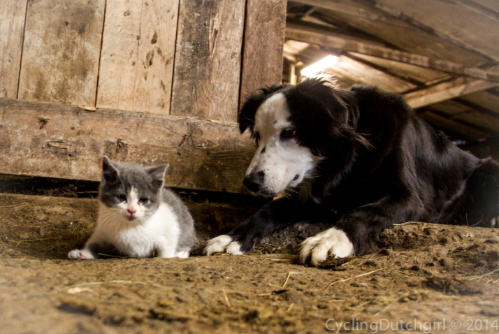 dogs and kittens