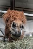 Hi Horse