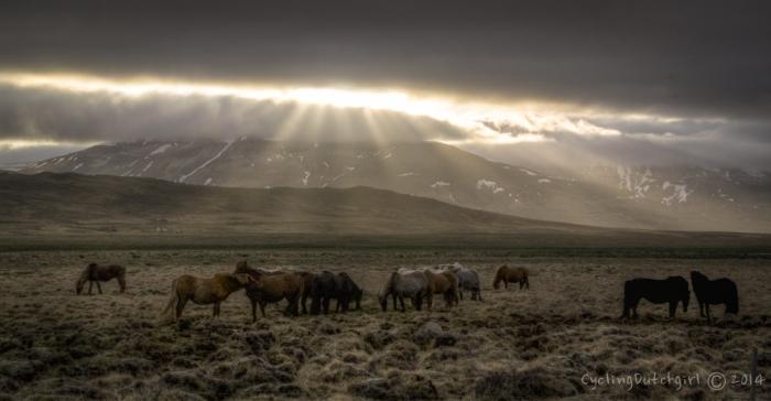 Crepuscular Horses