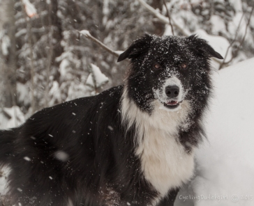 Jake in snow