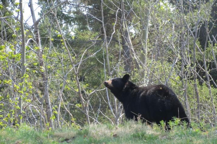 faulty bear