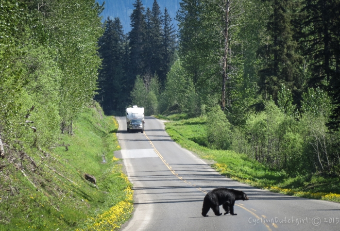 Bear in the middle of the road