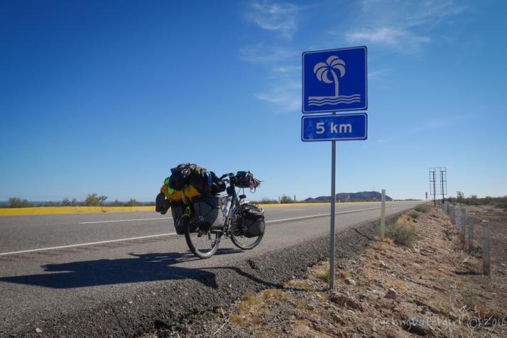 5km to a tree