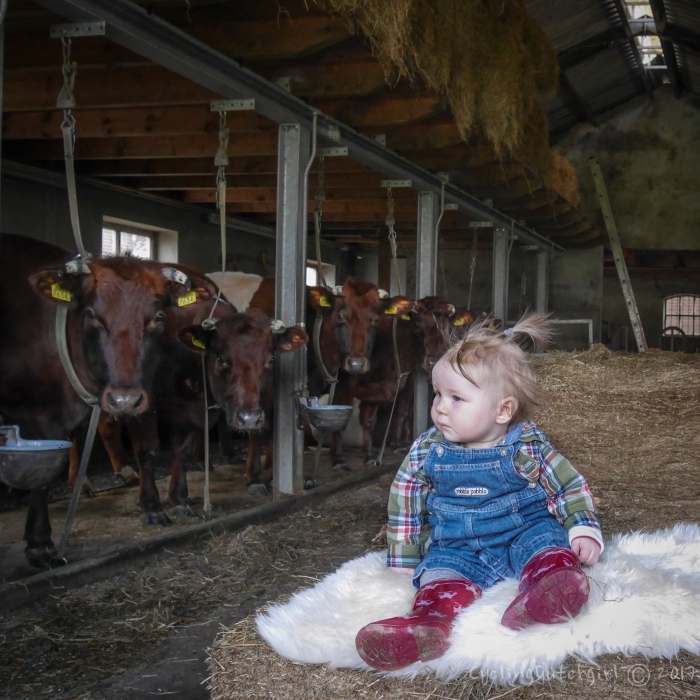 in the cowshed